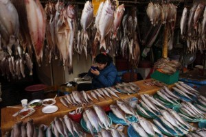 busan fish